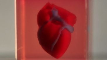 Discovery: The human heart shrinks in Space!