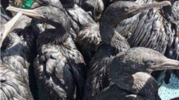 south africa struck by avian influenza