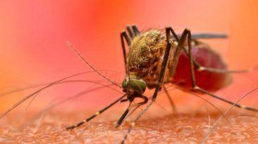 Oxford University proffers Malaria Vaccines